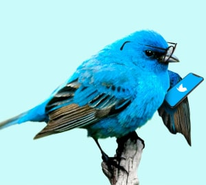 Продвижение Twitter (Твиттер) 2